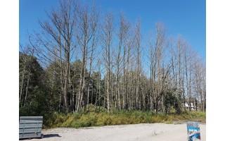 Neregėtas įžūlumas: vietą statyboms ruošė sunaikindami 171 medį
