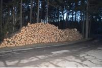 Prie Naglio alėjos kertamos pušys suvirpino palangiškių širdis