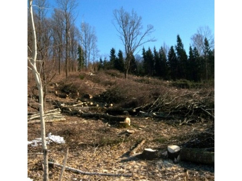 Pajūrio miškuose – kraštovaizdžio formavimo darbai