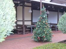 Prie dažnos Palangos kavinės stovi papuošta kalėdinė eglutė.