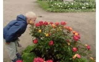 Birutės parko dieną literatūriniai susitikimai keis vienas kitą