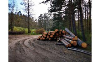Palangos botanikos parke iškirstus medžius užfiksavęs Tomas pasipiktino: parkas primena lentpjūvę