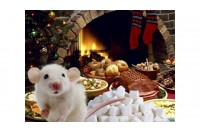 Iki, astrologine Kiaule, būk pasveikinta, Baltoji žiurke!