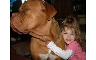 """Palanga savo šunų nei registruoja, nei sudaro jiems sąlygų """"civilizuotai"""" gyventi"""