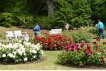 Palangos Birutės parko rožynas žavi savo grožiu