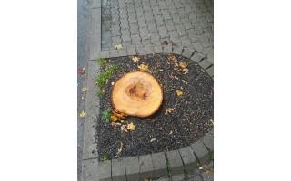 Sunerimo dėl Vytauto gatvėje kertamų medžių