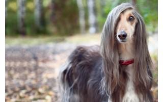 Šunų vedžiojimo ir dresavimo aikštelės atidarymas – jau kitą savaitę
