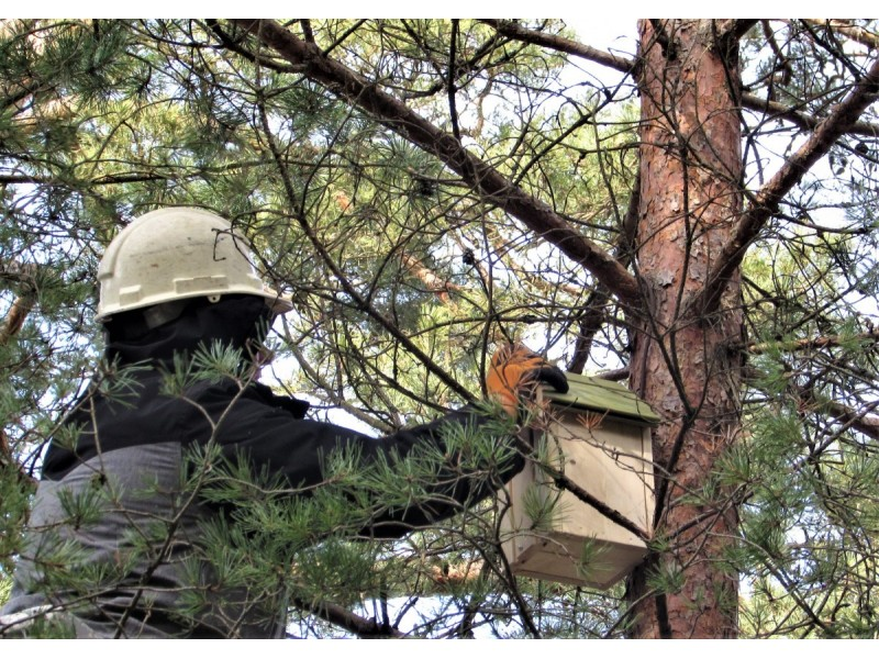 Viešosios tvarkos skyriaus specialistai surengė inkilų kėlimo akciją