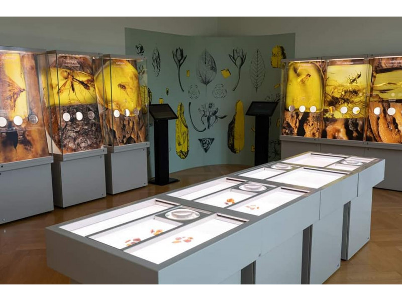 Palangos gintaro muziejus duris lankytojams atvėrė atsinaujinęs (FOTO GALERIJA)