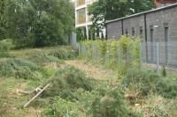 Žudo šimtamečius medžius