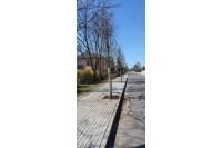 Naujai rekonstruotoje Kastyčio gatvėje pasodinti nauji medžiai
