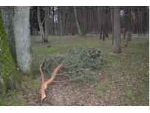 Vėjas laužė ne tik nudžiūvusiais medžių šakas.