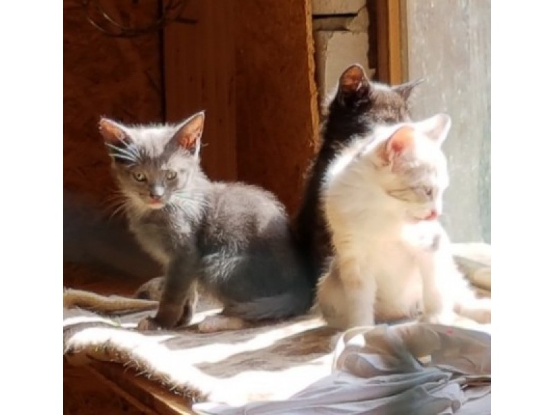"""Kačiukus Palangos komunalinis ūkis turės perduoti """"Nuarui"""""""