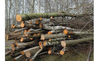Teismas priteisė 4 764 Eur žalos atlyginimą už neteisėtą juodalksnių sunaikinimą privačios žemės sklype