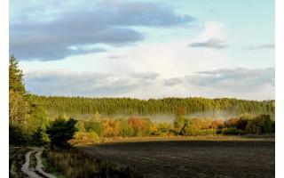 Miškus reikia ne tik sodinti, bet ir prižiūrėti