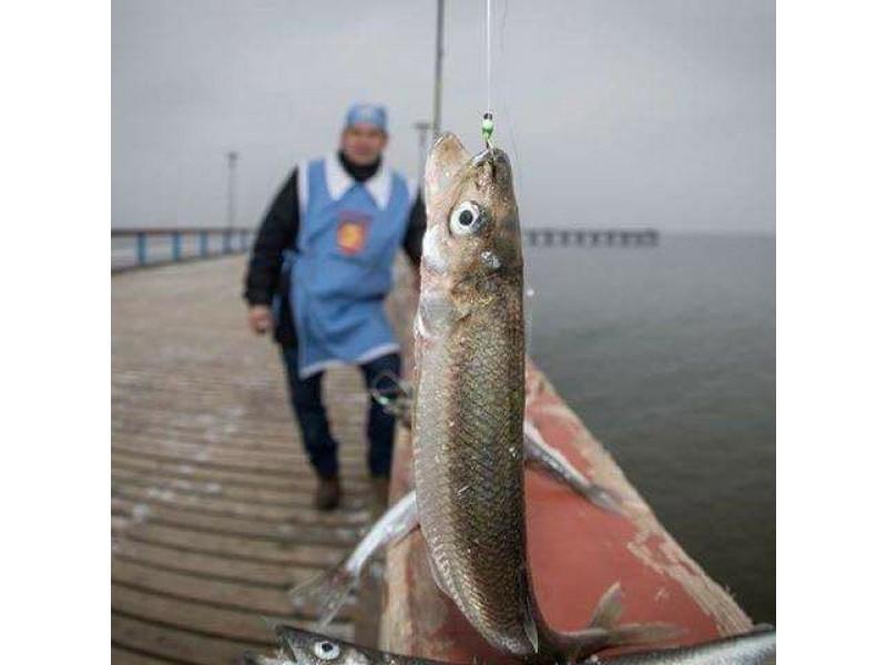 Palanga į stintų šventę kviečia ir pramogautojus, ir žvejus