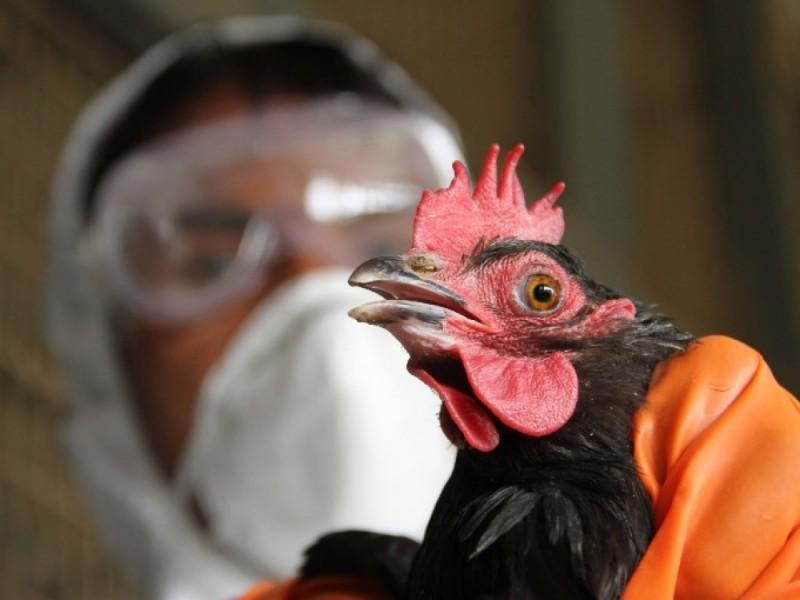 Lietuvoje reali grėsmė išplisti paukščių gripui