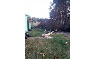 Savivaldybė: Kęstutis Oginskas dezinformuoja, leidimo iškirsti 25 brandžius medžius Savivaldybė neišdavė, pašalinti medžiai buvo sausi ir nudžiūvę