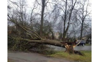 Nuvirtęs medis sukėlė avariją