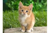 Beglobiai kačiukai sukiršino žinomas Palangos moteris