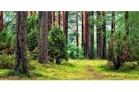 Palangos girininkijoje bus tvarkomi rekreacinės paskirties miškai