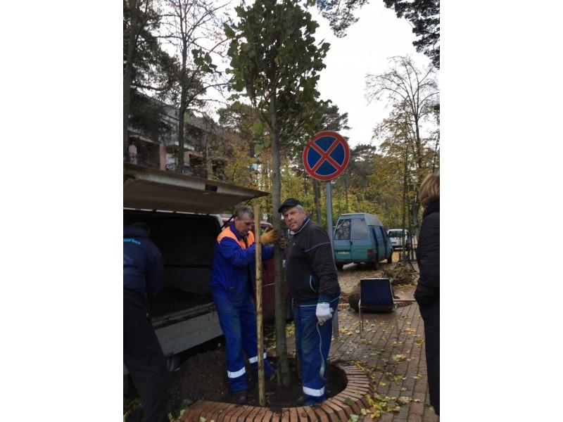 Miesto erdves papuoš per septyniasdešimt naujų medžių