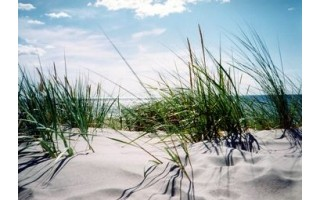 Palangos paplūdimio kopose vokietis nukentėjo  nuo ilgapirščių