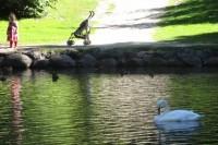 Į Palangos Birutės parką – ne tik pasigrožėti vaizdu