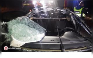 Magistraliniame kelyje A11 Šiauliai–Palanga briedis tapo didelės nelaimės kaltininku