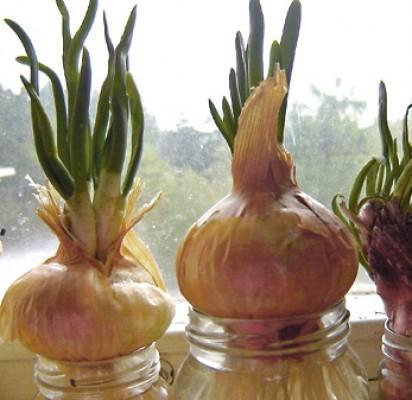 Ko reikia organizmui pavasarį: vitaminai ir jų šaltiniai