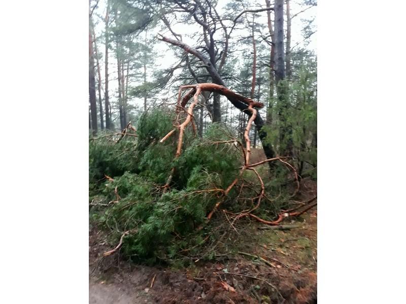 Akis bado audrų neatlaikę medžiai