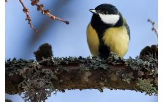 Pasigedo parke paukštelių