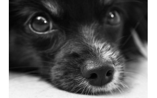 Dėl Kretingos rajone pakarto šuns policija pradėjo ikiteisminį
