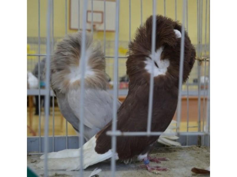 Palangiškiai grožėjosi dekoratyviniais paukščiais ir balandžiais